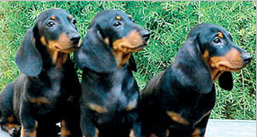 dog breed profile