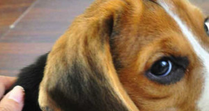 Find Out the Right Way to pet a dog