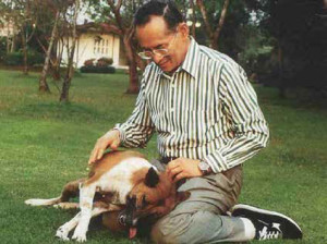 Thai King Bhumibol Adulyadej saves a mongrel from the street, adopts and names him 'Tongdaeng'.