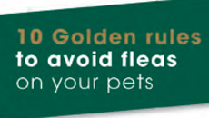 10 Golden Rules to avoid fleas on your pets