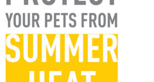 PROTECT YOUR PETS FROM SUMMER HEAT