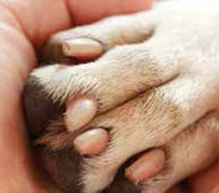 dog paw cut between toes