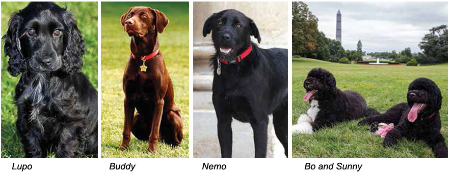 Presidential Pooches Dogs And Pups Magazine