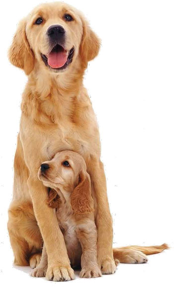 Did You Know About Single Puppy Syndrome Dogs And Pups Magazine